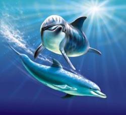 Dolphin clipart underwater
