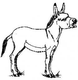 Mule clipart donkey