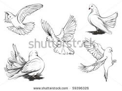 Drawn dove flight sketch