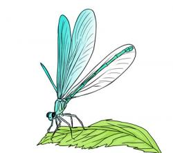 Dragonfly clipart green dragonfly