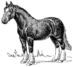 Clydesdale clipart black and white