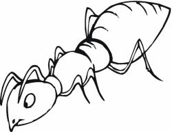 Ants clipart drawn