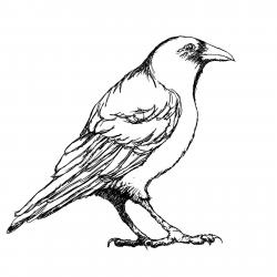 Crow clipart outline