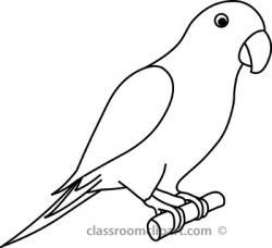 Drawn parakeet black and white