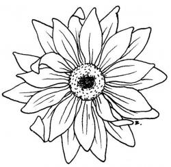 Gerbera clipart black and white
