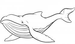 Sharkwhale clipart humpback whale