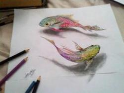Drawn goldfish