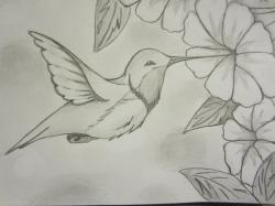 Drawn hummingbird hummingbird flower