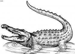 Drawn crocodile american alligator