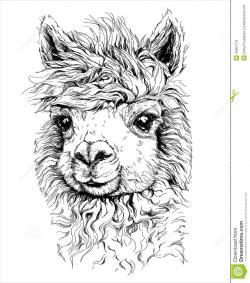 Drawn llama alpaca