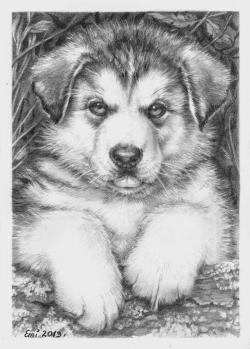 Drawn husky cute animal