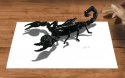 Drawn scorpion pencil drawing