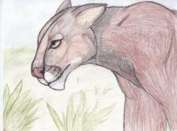 Drawn cougar epic animal