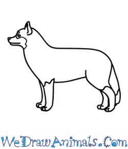 Drawn husky easy