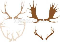Drawn moose moose antler