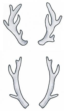 Drawn dear antler