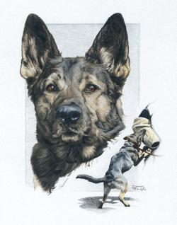 Drawn german pinscher police dog