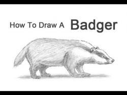 Drawn badger