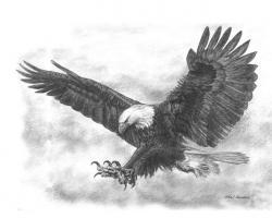 Drawn eagle