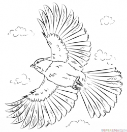 Drawn dove flight drawing