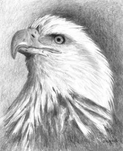 Drawn eagle artwork
