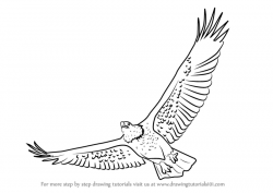 Drawn eagle flight drawing