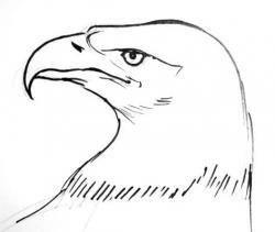Drawn eagle profile