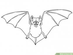 Drawn bat