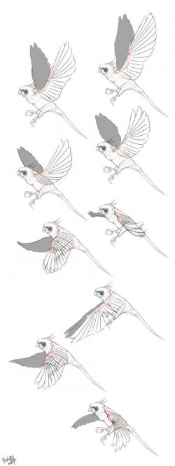 Drawn parakeet bird wingspan