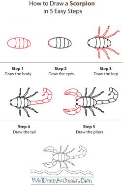 Drawn scorpion simple