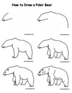 Drawn polar  bear arctic landscape