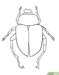 Drawn beetle
