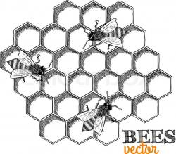 Drawn bees bee honeycomb
