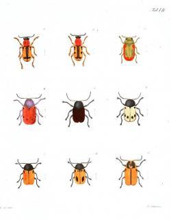 Beetles clipart garden animal