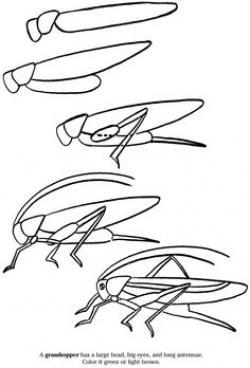 Drawn grasshopper Drawn Frog