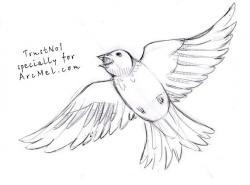 Drawn sparrow flight drawing