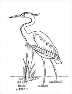 Great Blue Heron clipart black and white
