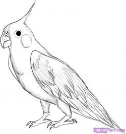 Cockatiel clipart black and white