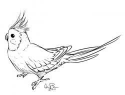 Cockatiel clipart sketch