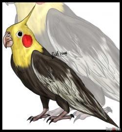 Drawn brds cockatiel