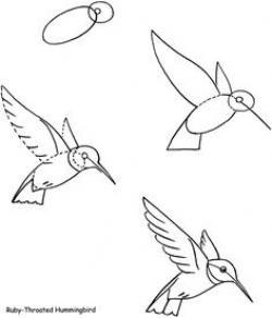 Drawn hummingbird cute