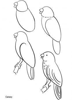 Drawn parakeet easy draw