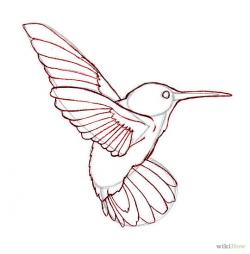 Drawn hummingbird line drawing