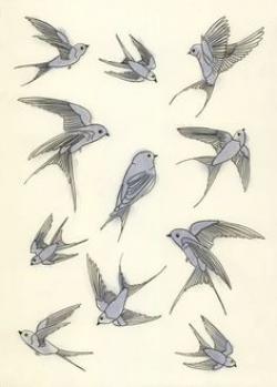 Drawn swallow cute bird