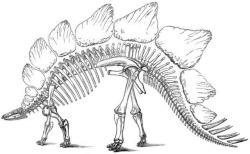 Fossil clipart stegosaurus