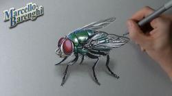 Drawn flying invertebrate