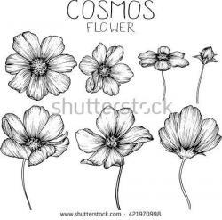 Drawn elower cosmos flower
