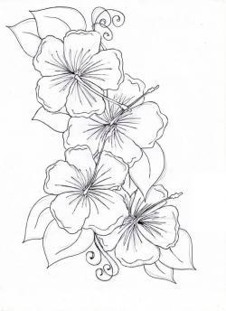 Drawn hibiscus beautiful flower