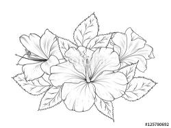 Drawn hibiscus lily