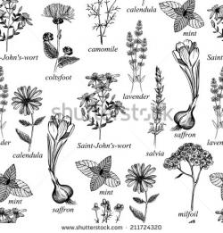 Drawn herbs